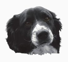 Border Collie and the Equal Time Message by Corri Gryting Gutzman