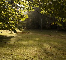 Kangaroo Valley - Early Morning Sun by Timothy Kenyon