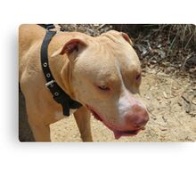 Perfect Pit Canvas Print