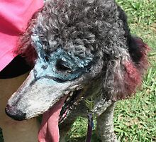 Perfect Poodle by Vicki Childs