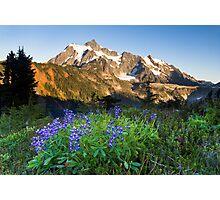Lupines and Mount Shuksan Photographic Print