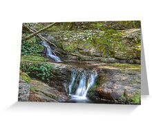 In the rainforest, Minnamurra NSW Australia. Greeting Card