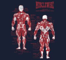 musclewise musculature anatomy RED/WHITE by musclewise