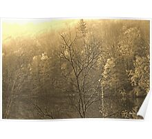 Autumn Morning at the Lake in Sepia Poster
