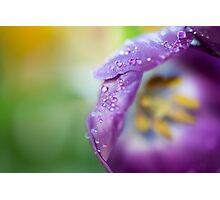 Tulip 1345 Photographic Print