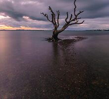 The Skeleton Tree 2.0, Moreton Bay by McguiganVisuals