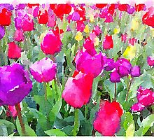 Tiptoe through the tulips by candysfamily