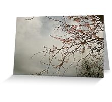 Early Cherry Blossoms  Greeting Card