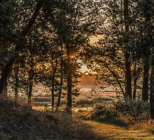 Early morning forest by marleneke66