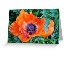 Orange and Purple Poppy Greeting Card
