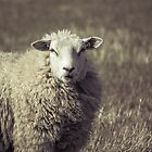 Sheep by Jasper Smits