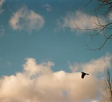 As The Crow Flies by Jessica Reilly