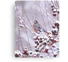American Robin In Winter Canvas Print