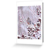 American Robin In Winter Greeting Card