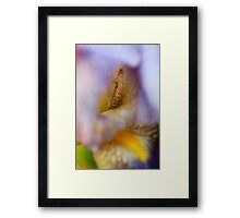 Bearded Iris Floral Abstract Framed Print