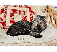 Max Relaxing Photographic Print