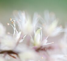 Tiarella Foam Flower Soft Abstract II by Lee Craig