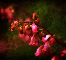 Coral Bells Ringing  by Lee Craig
