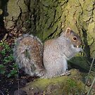 Grey Squirrel by elsie