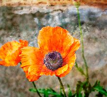 Oriental Poppy Orange on Stone by Lee Craig