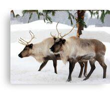 Caribou Capture Canvas Print