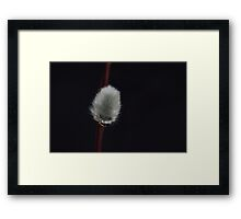 Furry Catkins Framed Print