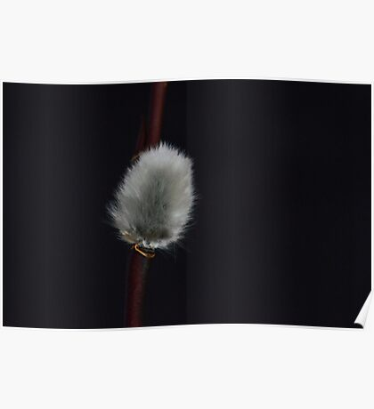 Furry Catkins Poster