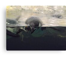 Swimming Penguins, Central Park Zoo, New York City Canvas Print