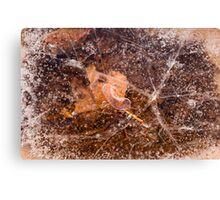 Leaf in Ice Canvas Print