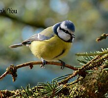 Blue Tit Thank You Card by Paula J James