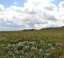 white flowers on grass field with hillside by SigSig