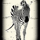 Zebra. by Livvy Young