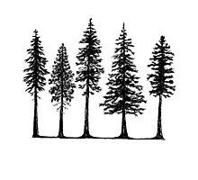 Pines Photographic Print