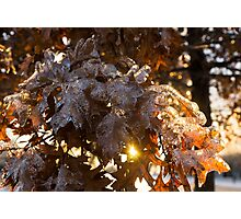 Honey Colored Honeycomb Ice With a Sun Flare Photographic Print