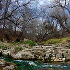 San Vicente Creek by Vicki Pelham