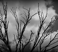 Dead Tree Branches by jimrac