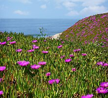 Springtime in Half Moon Bay by Ellen Cotton