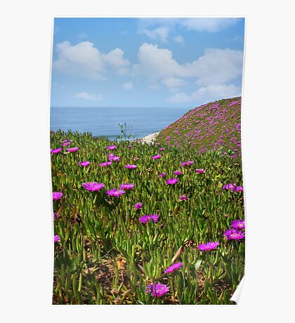 Springtime in Half Moon Bay Poster