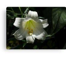 Of Water Pearls and Easter Lilies Canvas Print