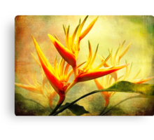 Flames of Paradise Canvas Print