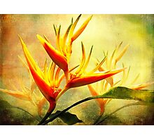 Flames of Paradise Photographic Print