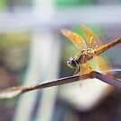 Dragonfly by Th3rd World Order