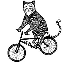Cat on a Bike Ride  Photographic Print
