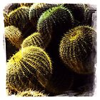 Barrel Cactus I by Roger Passman