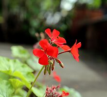 A Red Flower by OrsiniM