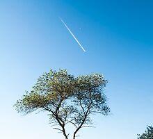 Lone tree, Jetstream & Moon by Glaspark