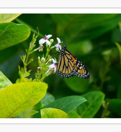 Pure Nectar  Sticker