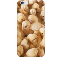 Large Group Of Baby Chicks On Chicken Farm iPhone Case/Skin
