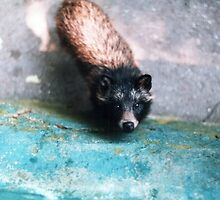 Cute raccoon dog by AlexandraDzh