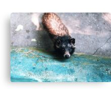 Cute raccoon dog Canvas Print